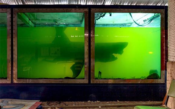 廃墟となったテーマパーク内で、防腐液に浸された状態で置き去りになっていた巨大ホホジロザメ(オーストラリア)