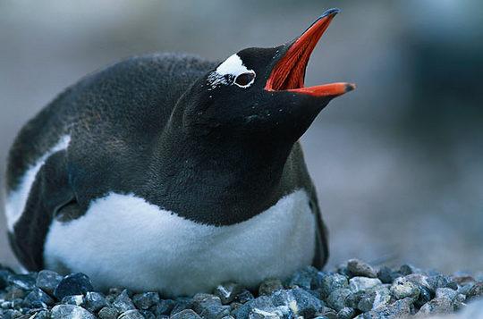 penguins_13