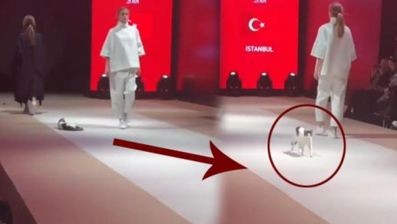 リアルキャットウォーク。ファッションショーで猫が舞台を颯爽と歩く事案発生(トルコ)
