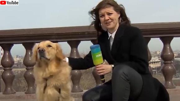 犬がレポーターのマイクを盗んで逃走するハプニング