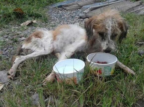 ネグレクトで瀕死の状態にあった犬が救助され奇跡的に回復し、里親に引き取られた矢先の出来事だった。