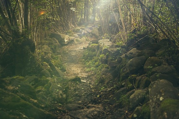 forest-438432_640_e