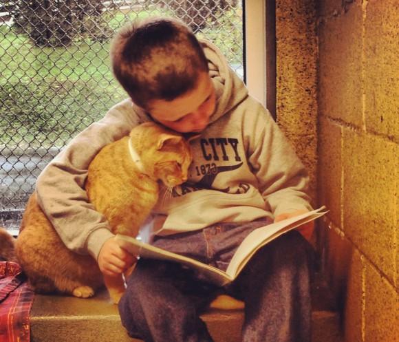 猫に人間のぬくもりを。保護施設にいる猫に子どもたちが本を読み聞かせるプログラム「ブックバディー」