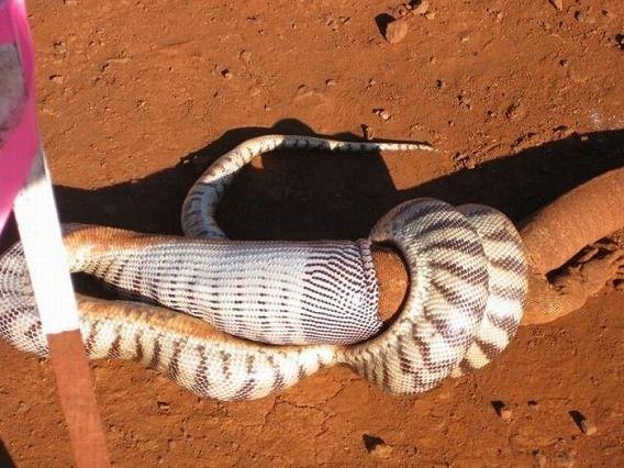 snake_06