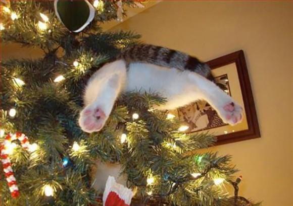 クリスマスツリーの飾り物として木に埋まっていたり、盛大に破壊したりする猫たちのメリークリスマス!