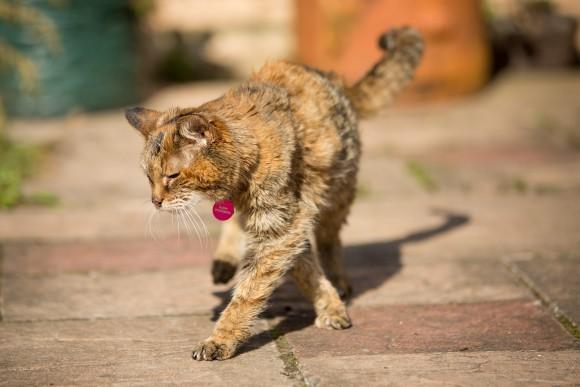 人間に換算すると114歳?世界最高齢の猫ポピーさんが24歳の誕生日を迎える