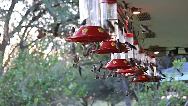 HummingbirdCraze1