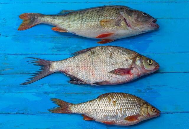 fish-5403312_640