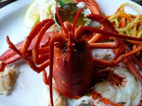 lobster-54994_640_e