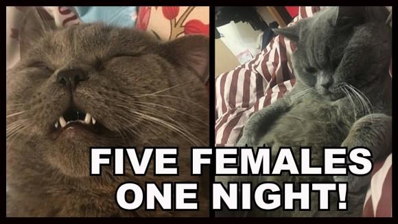 ペットホテルで一夜を過ごしたオス猫。ハーレム状態で5匹のメス猫を抱き、精魂尽き果て点滴を受ける(中国)