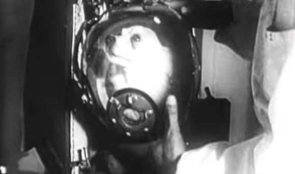 最初から片道切符だった。宇宙飛行に初めて行った犬、ライカにまつわる10の悲劇