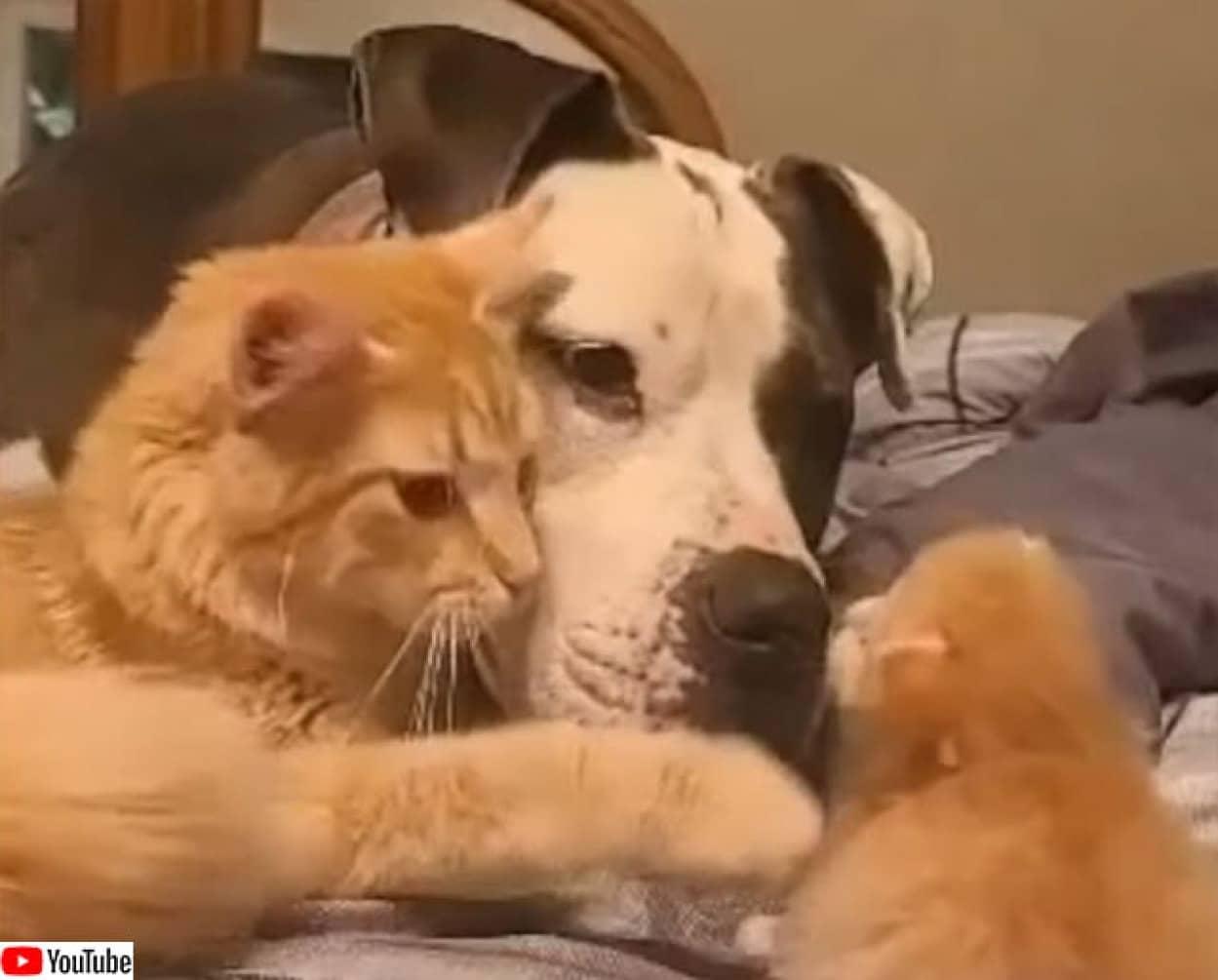 犬と絆を結んだ母猫は、共に我が子の成長を見守る