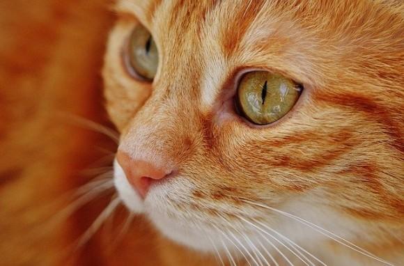cat-1652822_640_e
