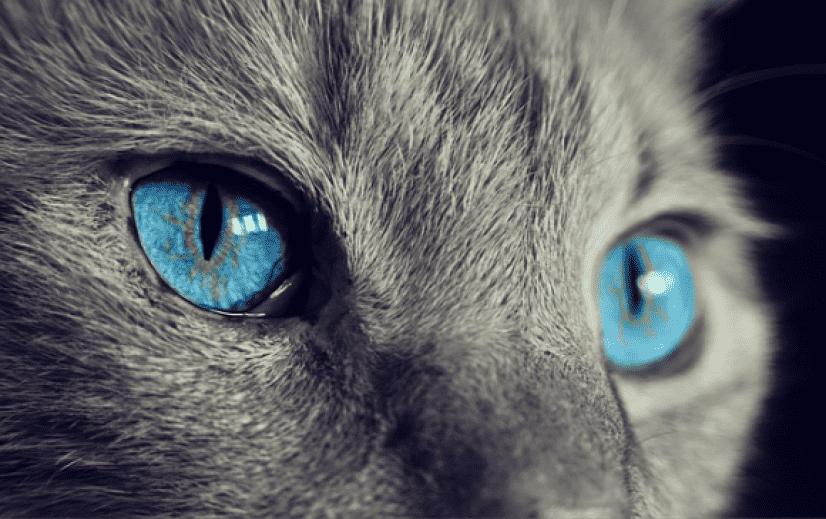 cat-1285634_640_e