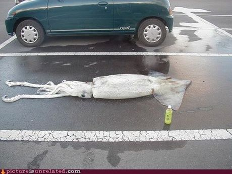 wtf_pictures_37