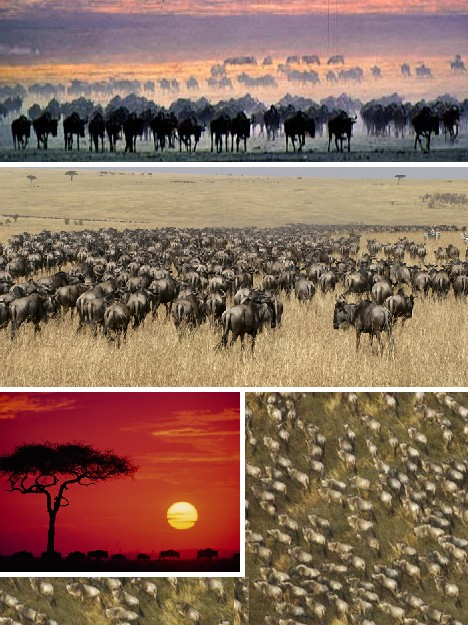 animal_migrations_2a