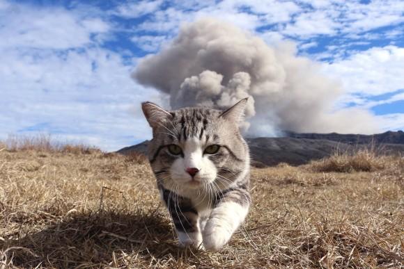 火山噴火をバックに歩く猫があまりにも勇ましかったのでコラ職人がんばる