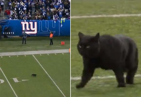そろそろ出番かな?フットボールの試合に乱入した猫、華麗なタッチダウンを決めて劣勢チームを逆転に導く(アメリカ)