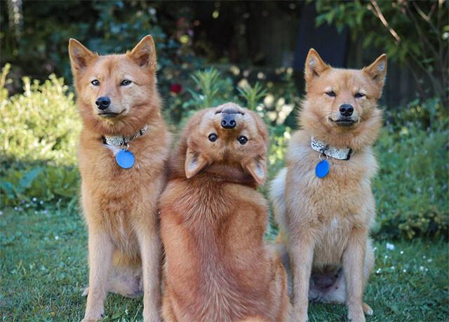 エクソシストかな。首を180度ひっくり返す技を習得した犬
