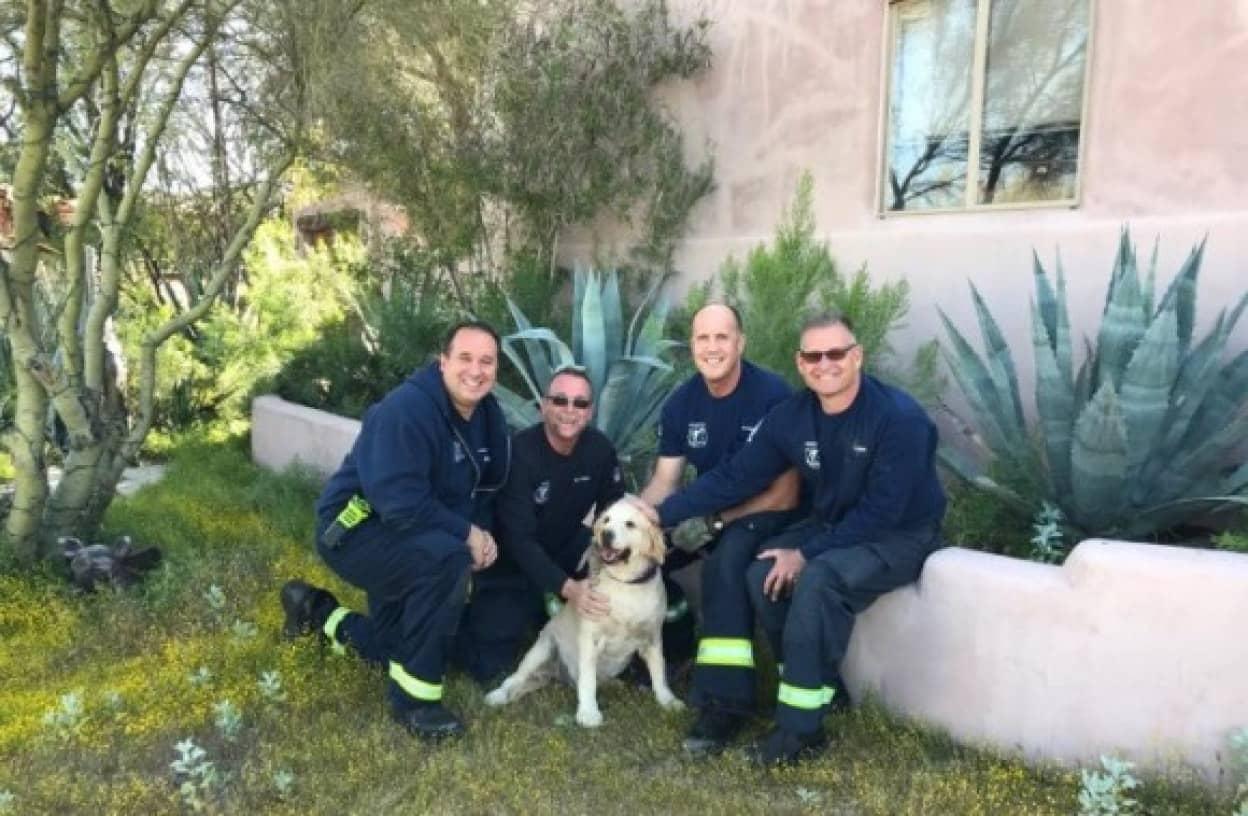 消防士による犬の救出劇