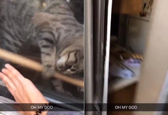 グッジョブキャット!家に入れない飼い主を助ける為、木の棒でロックされたガラス窓を開けるお手柄猫