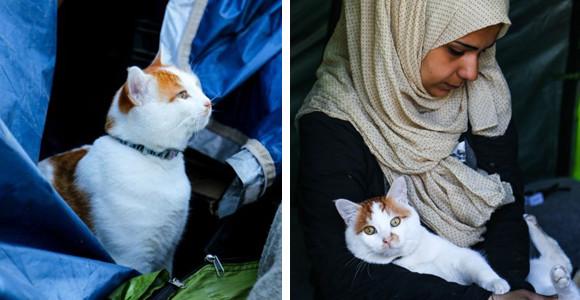 家族を見捨てることは絶対にできない。住み家を奪われ命からがら逃げてきた避難所に猫を連れてきたシリアの家族