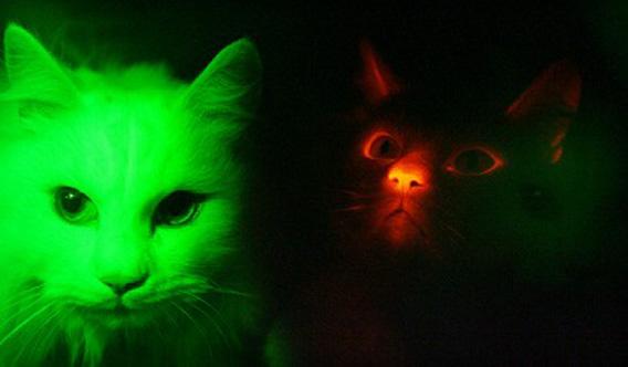 ah_cat1