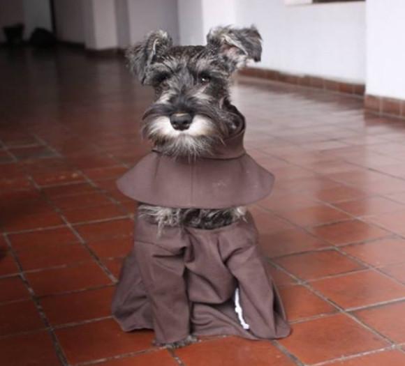 敬虔なる修道犬となった保護犬(ボリビア)