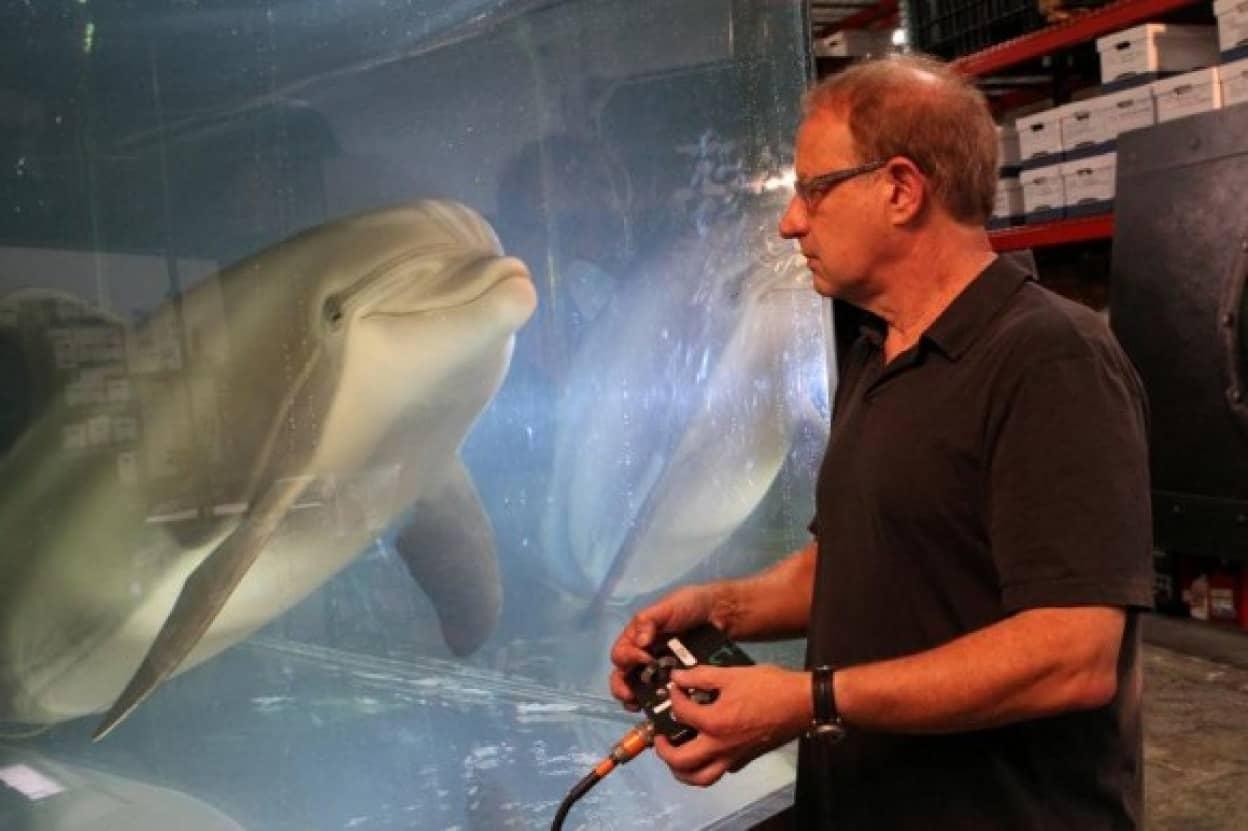 本物そっくりのアニマトロニクスのイルカが水族館で泳ぐ