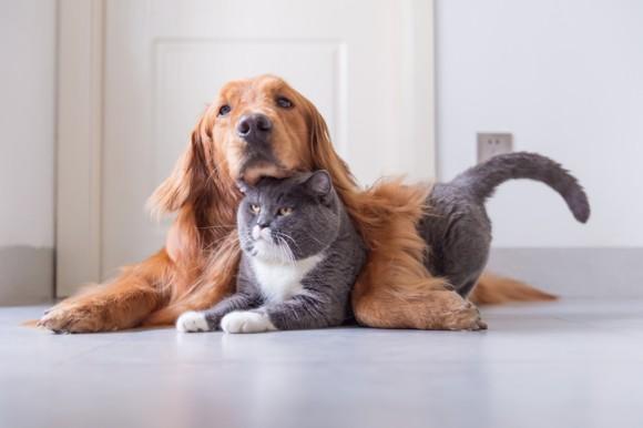 アメリカで犬や猫の里親ボランティアをしている人々は、それらにかかった諸経費を申告すれば税金控除されることに。