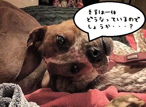人によってはゾンビ犬に見える!?目の錯覚でホラーとなる、ネットを震撼させた犬の写真