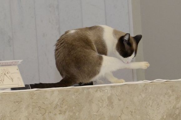 ネコと和解せよ。ふらっとやってきて教会に住みついた猫が、猫司祭となる(ブラジル)