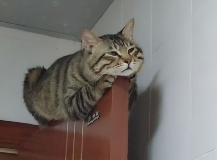 エッ!そこ!?細い扉の上で眠る猫