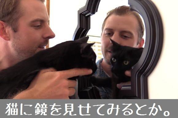 猫飼いアルアル早く言いたい~、猫飼いアルアル早く伝えた~い~。猫を飼っている人にとっての10のアルアル動画