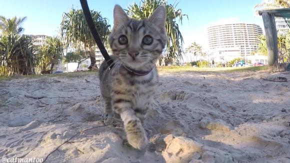 猫にリードを付けて散歩させる方法