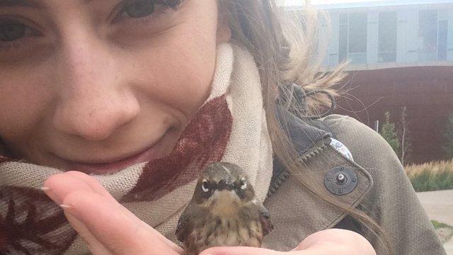 地面にうずくまっていた小鳥を保護、手のひらで温めていたらもう一羽小鳥が飛んできた!