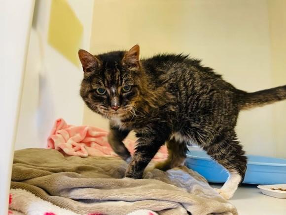 20年行方不明だった猫と再会、最後は飼い主に見送られ旅立っていった