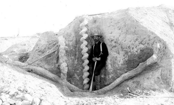 なんじゃこりゃミステリー。地中から出てきた巨大ならせん状の構造物「悪魔のコルクスクリュー」その正体は?