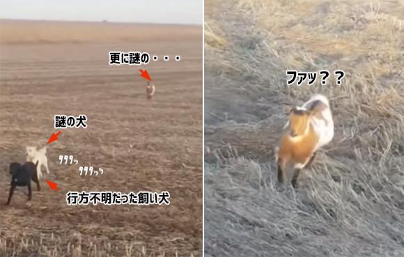 行方不明になっていた飼い犬を探しに出かけたら、謎の犬とヤギを仲間に従えていた件(アメリカ)