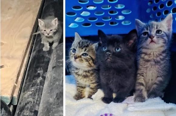 都市閉鎖直前、危機一髪で助け出された3匹の子猫(アメリカ)