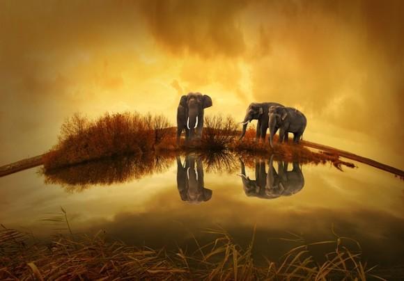 ゾウはすごく人間に近い生き物である。人間に似た特性があり個性が豊か(フィンランド研究)