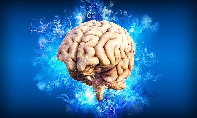 どこまで知ってる?人間の脳の構造、機能を学ぼう!