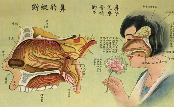 楽しく学べる中国のレトロな教育用人体解剖ポスター(1933年)