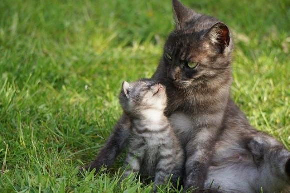 ナチュラルな母性。動物界のお母さんの子育て日記