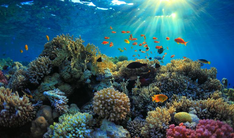 海洋生物が赤道から冷たい水に逃げ出している。大量絶滅の兆候なのか?