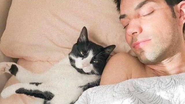 知れば知るほど病みつきにナール。猫による猫のための猫らしからぬ猫画像