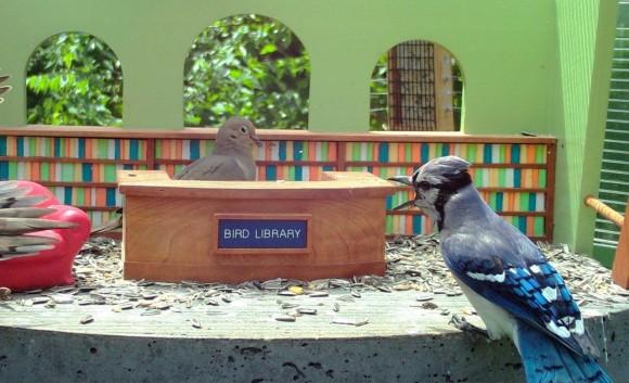 ミニチマ図書館にやってくる野鳥たちを観察できるライブ動画が配信中(アメリカ)