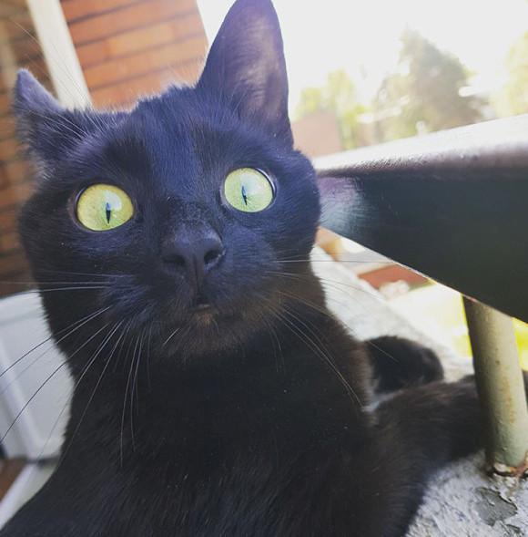 「およ?」はじめて外の世界を見た猫の反応