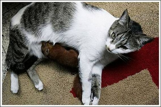 cats_and_squirell_04