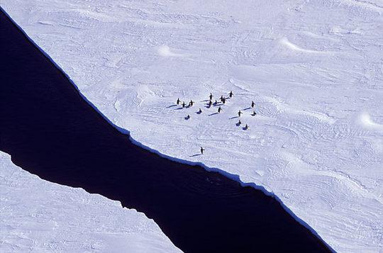 penguins_05